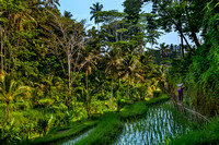 Tegallalang Rice Paddy Fields, Bali