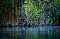 "Caribbean, ""Caño Frió"", ""Dominican Republic"", Freshwater, Idyllic, Island, Lagoon, Landscape, Light, Mangrove, Nature, Outdoors, Peninsula, ""Playa Rincon"", ""Plody mangrovnika"", ""Rhizophora mangle"", ""R"
