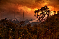 Sunset in the Cloud Forest