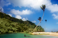 "Bay, Beach, Caribbean, ""Caribbean Sea"", Coastline, ""Coconut Palm Tree"", Day, ""Dominican Republic"", Idyllic, Island, Lagoon, Landscape, Nature, Outdoors, ""Palm Tree"", Peninsula, ""Playa Rincon"", Reef, """