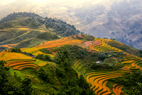 """Hoang Lien Nature Reserve"", ""Hoang Lien Son"", ""Lao Cai Province"", Sapa, Vietnam, landscape, ""rice field"", ""rice terraces"", ""terraced fields"" yellow, rice"