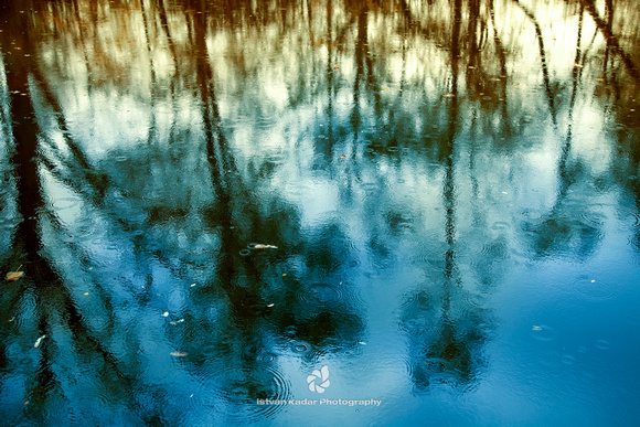pond trees reflection rain blue abstract water