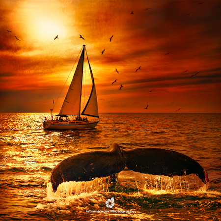 """Atlantic Ocean"", ""Banderas Bay"", ""Humpback Whale"", Mexico, ""Puerto Vallarta"", birds, boat, landscape, ocean, sailing, sailing, sea, sunset, ""whale tale"", ""whale watching"", red"