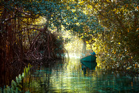 "Boat, Boating, Caribbean, ""Dominican Republic"", Idyllic, Island, Lagoon, Landscape, Light, Mangrove, Nature, Outdoors, Peninsula, ""Playa Rincon"", ""Plody mangrovnika"", ""Rhizophora mangle"", Río Frío, Su"