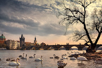 Birds of Prague